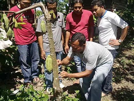Irwan, SP. M. Si sedang mempraktekkan cara sambung samping di kebun binaan lembaga ACDK (Foto Dok ACDK)
