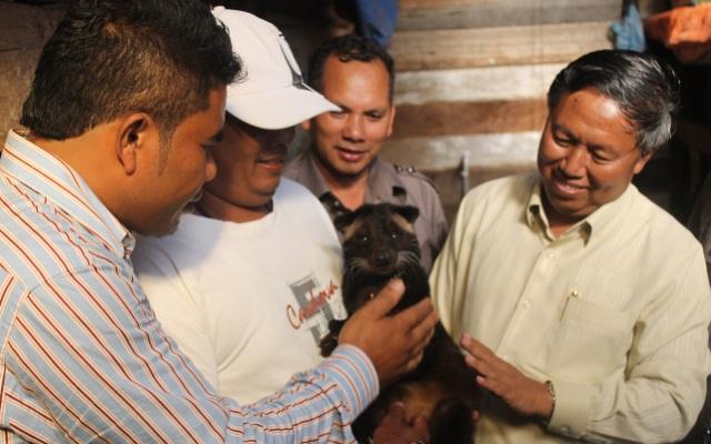 Sarjiman (topi putih) pemilik luwak alias musang di Aceh Tengah (Foto Tarmizi Age)