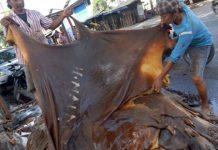 Penjualan kulit sapi (IST)