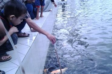 Seru! Ternyata di Masjid ini bisa Pancing Ikan