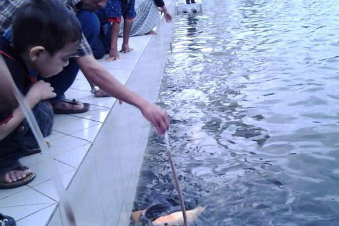 Memancing ikan di kolam Masjid Raya