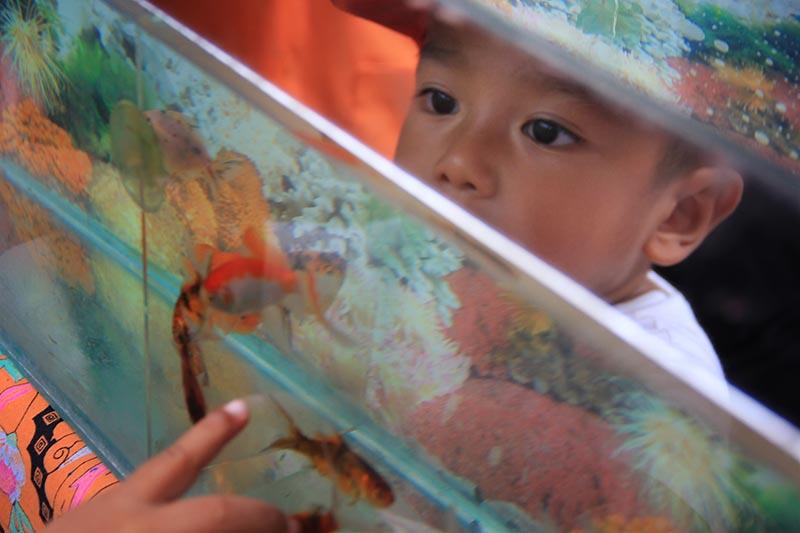 Seorang anak melihat ikan hias di Festival Kota  Hijau Banda Aceh (Foto M Iqbal/SeputarAceh.com)