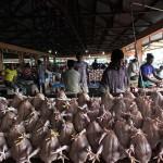 Penjual ayam potong menjual ayam seharga 35000 rupiah perekornya di pasar Lambaro, Banda Aceh (Foto M Iqbal/SeputarAceh.com)