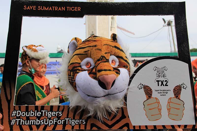 Penyelamatan Harimau Sumatera menggunakan hastag #DoubleTigers #ThumbsUpForTigers (Foto M Iqbal/SeputarAceh.com)