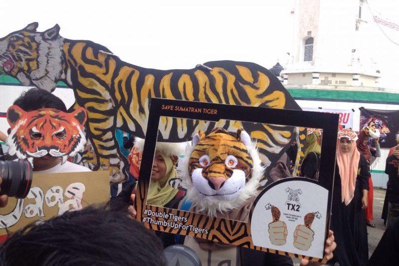 Save Sumatran Tiger 2016_Aceh